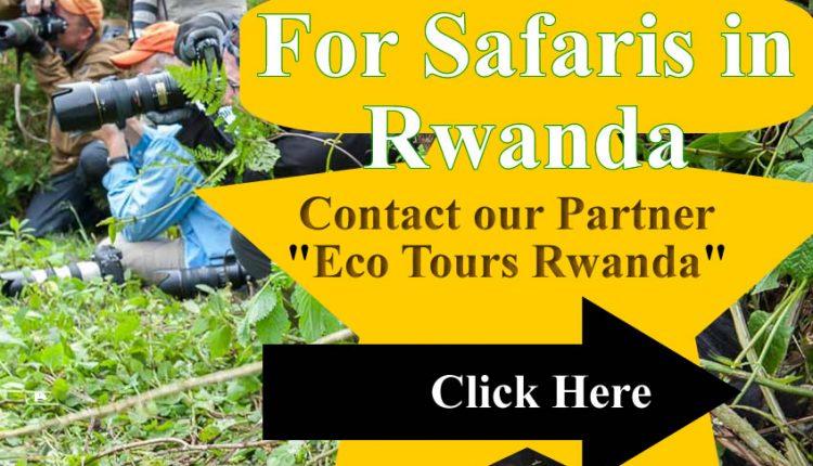 Eco Tours Rwanda Advert
