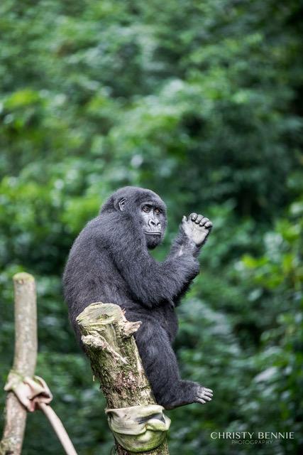 Trek Gorillas in Virunga
